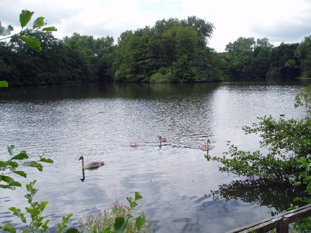 Lakes at Fen Place