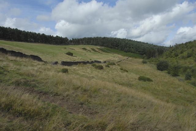 Dry stone walls in Cwm Gwenffrwd