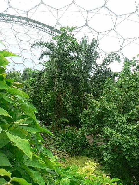 Interior Of Humid Tropics Biome Eden Project