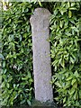 SW5033 : Tall wayside cross, Ludgvan churchyard by Jim Champion