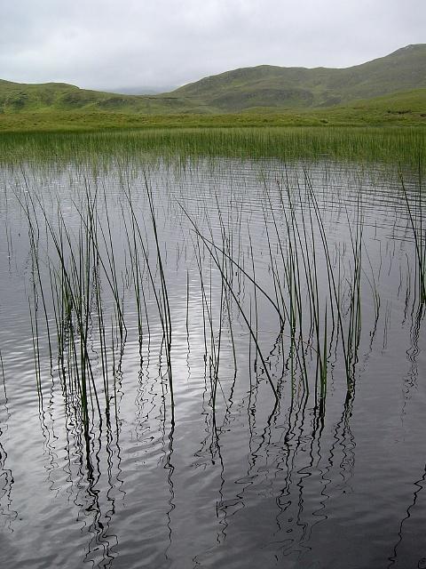 Reeds, Loch na Lochain