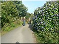 SW5930 : The way up Tregonning Hill, Balwest by Rich Tea