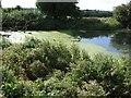 SP8024 : Pond by Manor Farm, Hoggeston by Rob Farrow