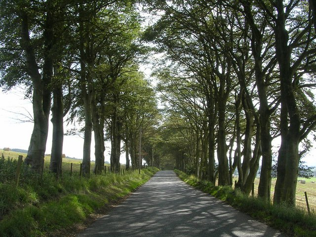 Tree-lined Road to Cormiston