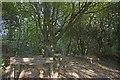 SW6443 : North Cliffs walk, Tehidy Park by Philip White