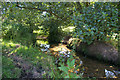 SJ7878 : Pedley Brook by Roger Gittins