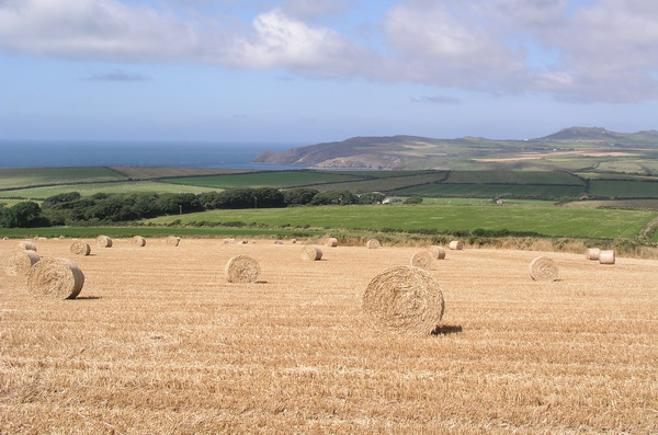 Pembrokeshire Fields