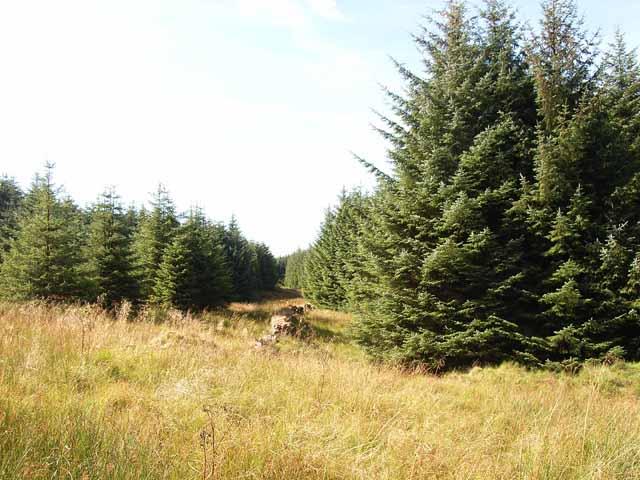 Foulbog Sike, Spadeadam Forest