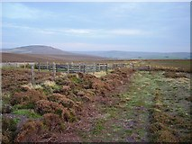 NT6268 : Sheep fold and track, Clints Dod by Richard Webb