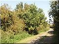 SP6508 : Bernwood Jubilee way at Ickford by David Hawgood