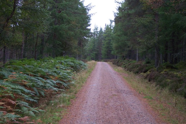 Forest track and cycle route