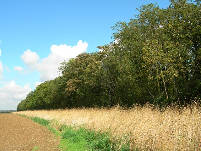 Wood adjoining The Common