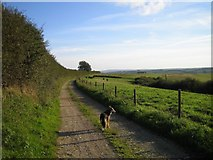 ST6302 : Bridlepath To Up Sydling Farm by Rupert Fleetingly