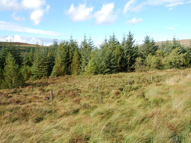Forestry in Glen Drynoch