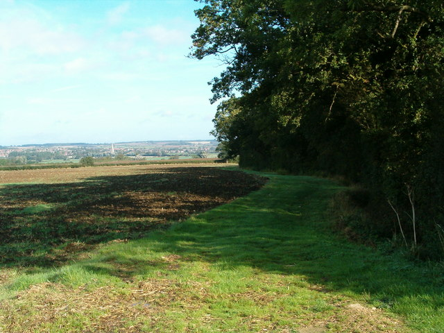 Hollington Wood