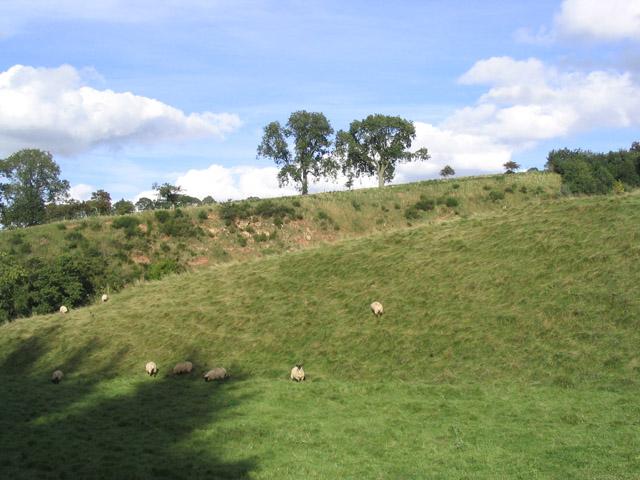 Rough grazing near Bedrule Mill