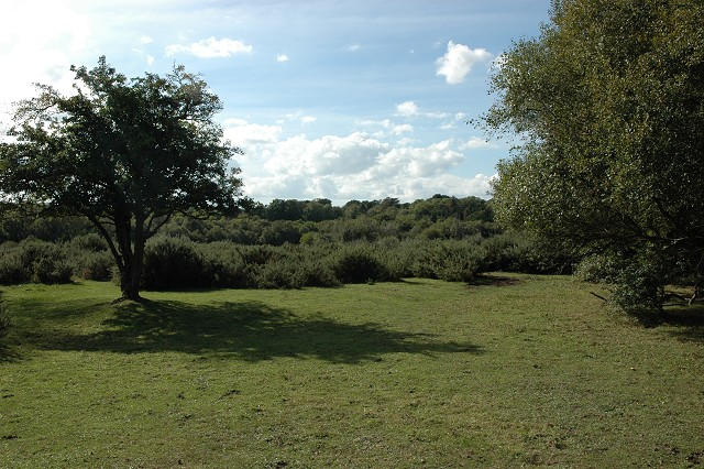 Heathland, Upper Pennington Common