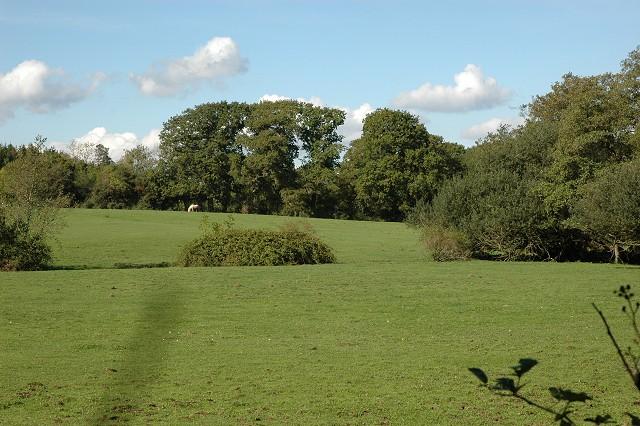 Grazing Field, Wainsford Road, Pennington