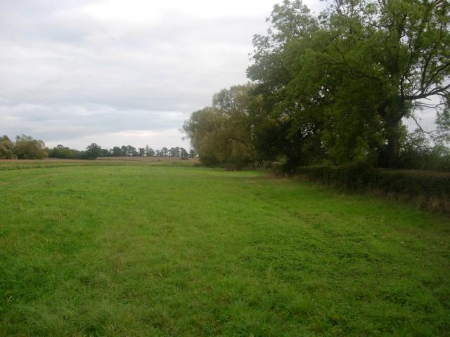 Field boundary along Tetchwick Brook