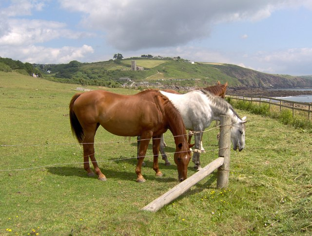 Horses, Wembury in background