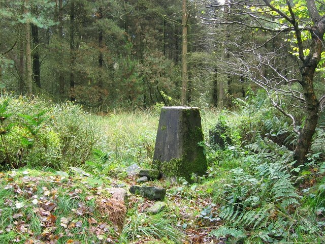 Triangulation pillar, Farley Moor Woods