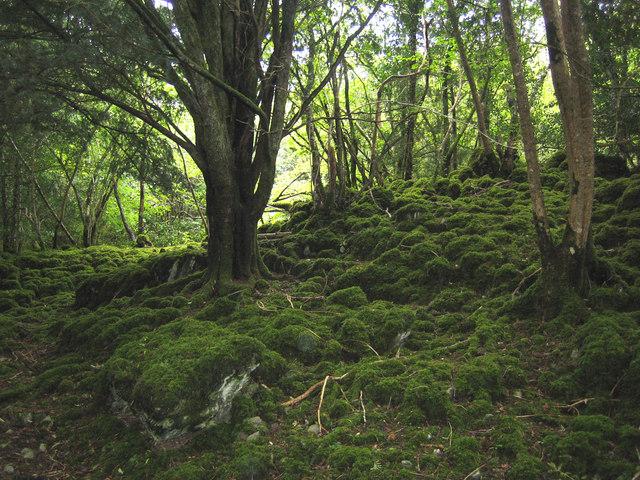 Reenadinna Yew Wood