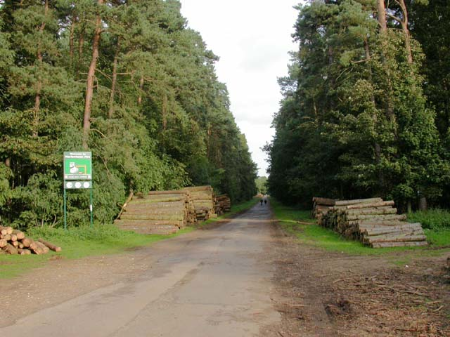 Footpath through Harlestone Firs