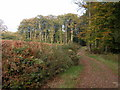 SO5205 : The Wye Valley Walk through Cuckoo Wood by Philip Halling