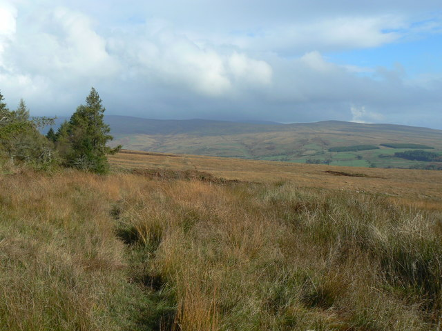 Highlandman's Wood - Glen Fruin track