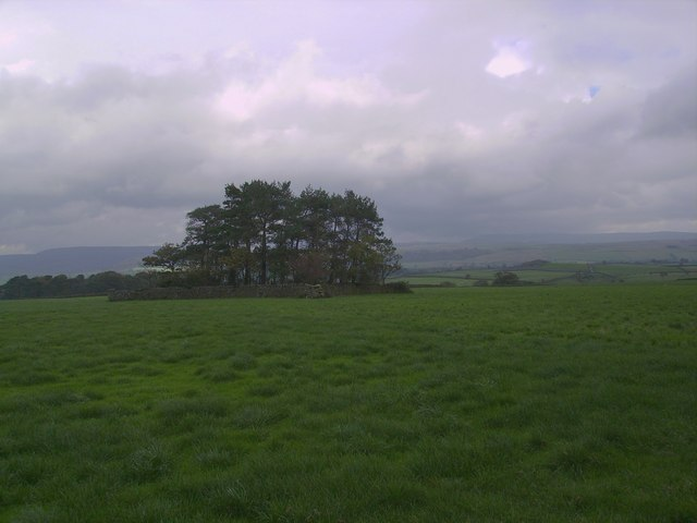 Small Plantation, Howith