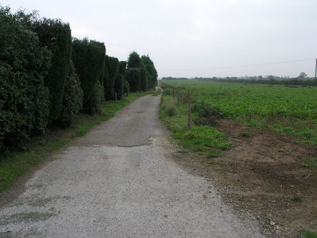 Footpath and Topped Trees