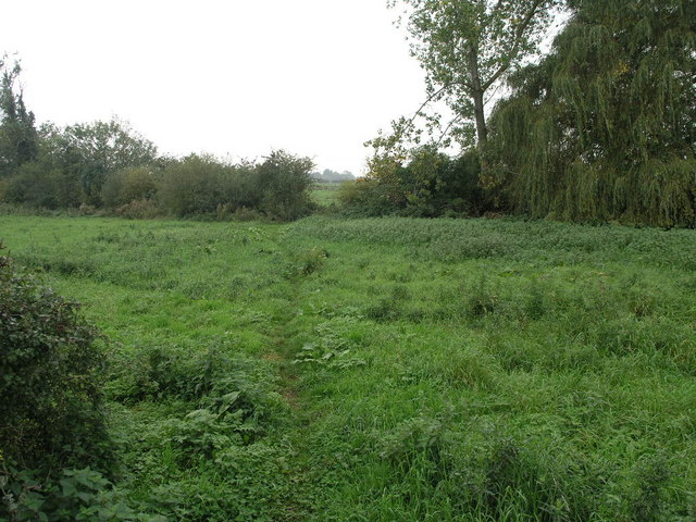 Footpath and Willow