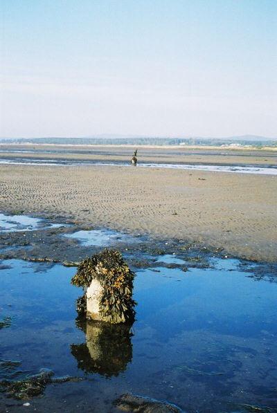 Posts on mudflats Dornoch Sands