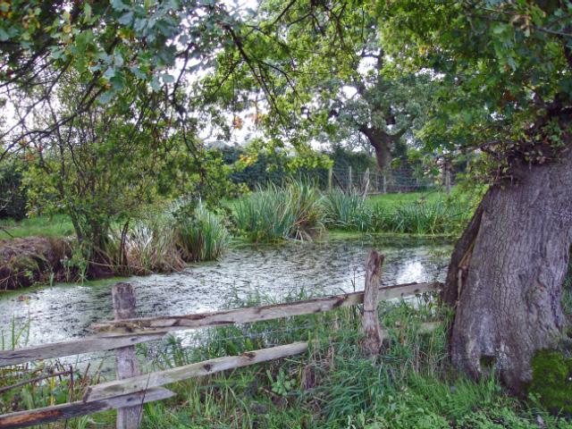 Sound: pond beside footpath near Whitegate Farm