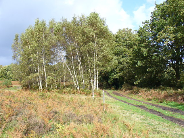 Bridleway on Pound Common