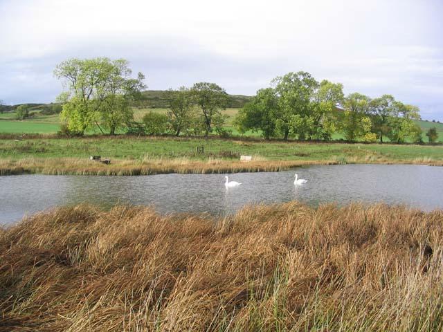 Pond at Whitrig Bog