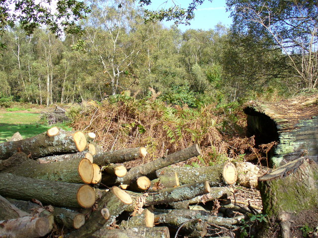 Logpile near Eastshaw Farm