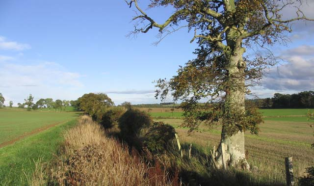 Field boundary and drainage ditch
