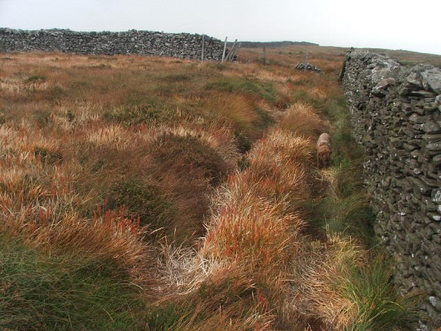 Autumn Grasses on Scoska Moor.