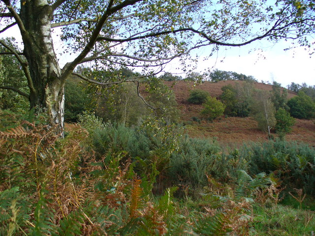 Woolbeding Common