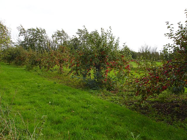 Fruit trees at Whitehill
