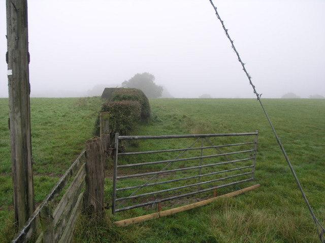 Misty Morning Path