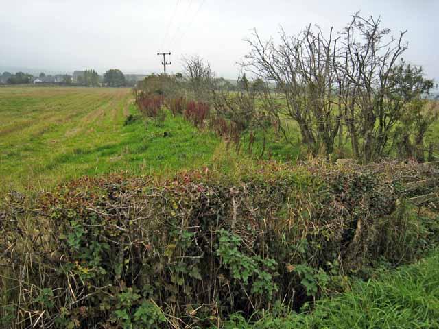 Hedgerow near Garpin