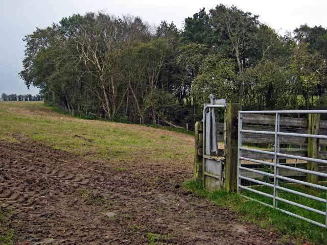Corner of field near Kirkmichael