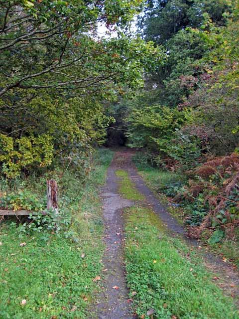 Woodland track near Cloncaird Castle