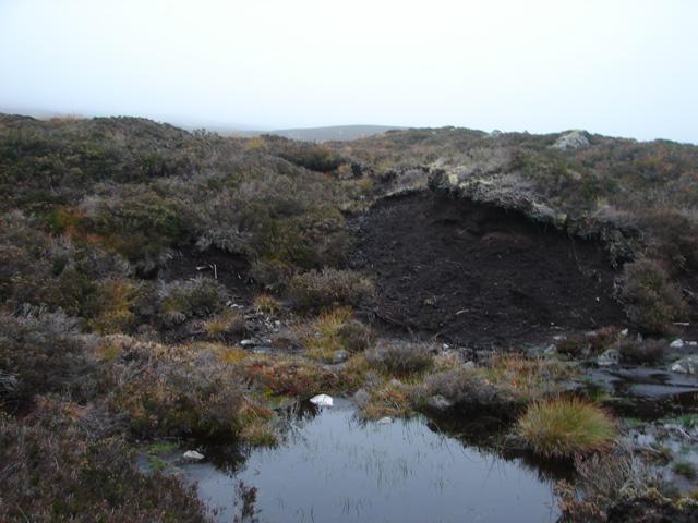 Exposed Peat