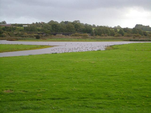 Bowling Green Marsh