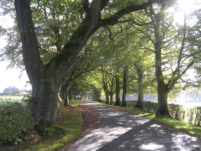 Beech-lined Drive to Rowallan Castle