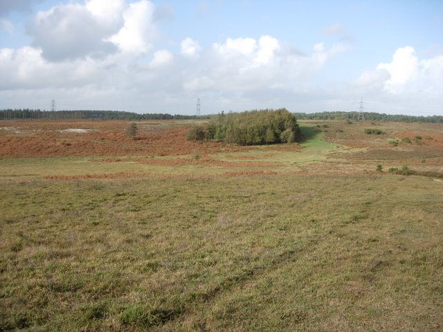 Remaining Woodland