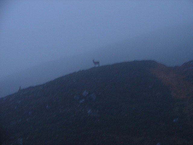A hind watches from the slopes of Meall an t-Slugain